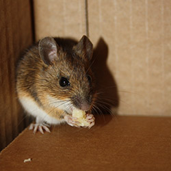 Mouse_250x250