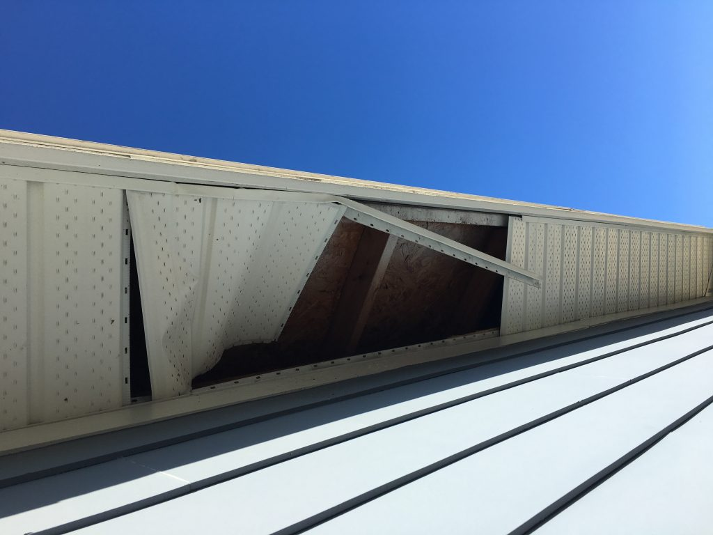 raccoon damage to soffit