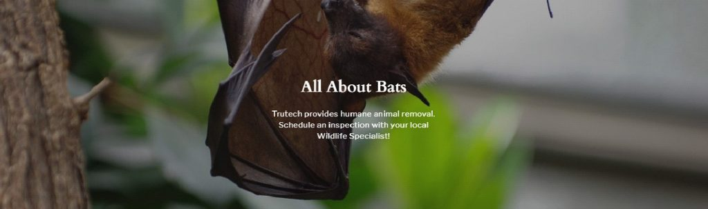 All About Bats - Trutech provides humane animal removal. Schedule an inspection with your local Wildlife Specialist!