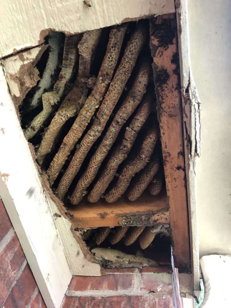 before honeycomb removal